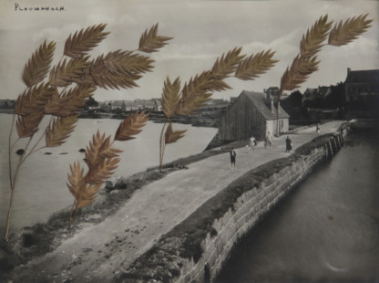 Collage de Céline Dominiak représentant un paysage en noir et blanc, chemin à Ploumanach, sur lequel sont collées des plantes séchées formant des arbres