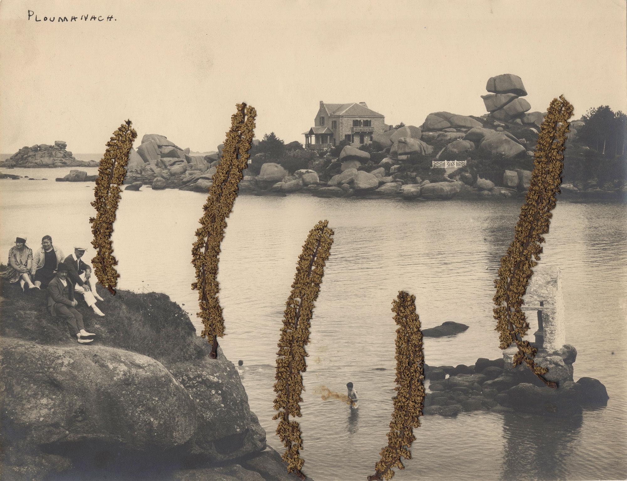Collage #50 de Céline Dominiak sur photographie argentique noir et blanc, paysage Bretagne aves plantes séchées